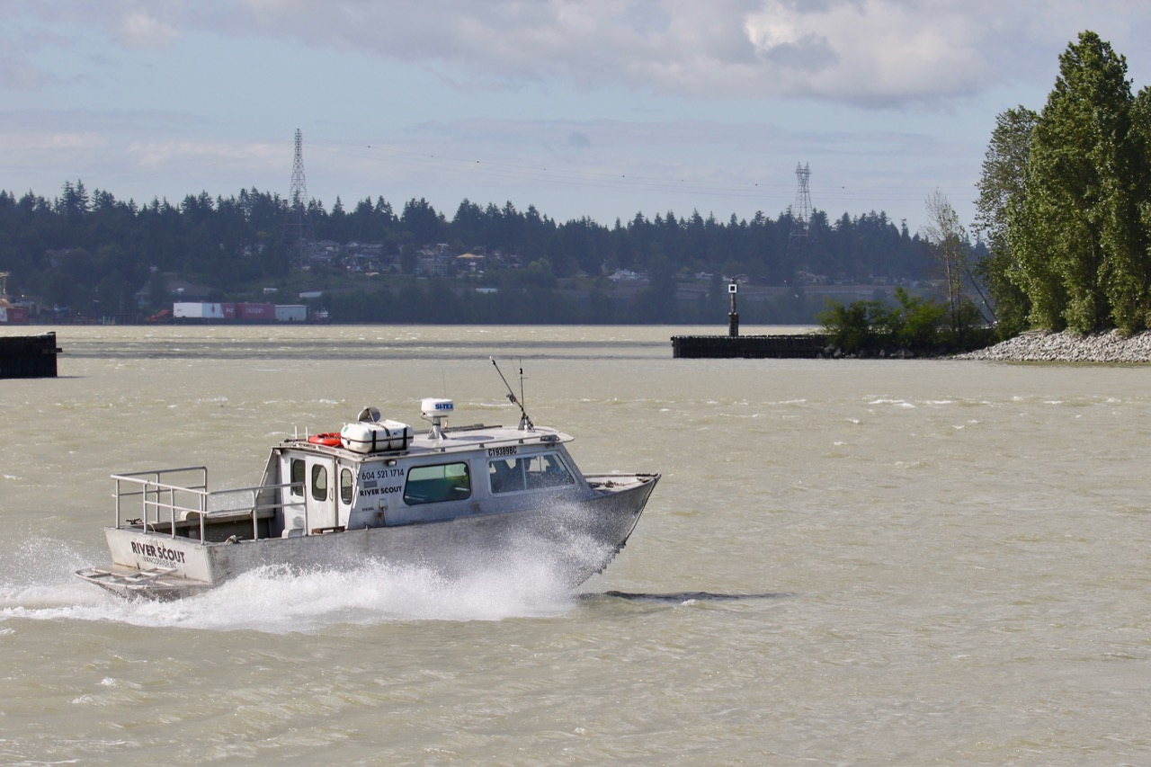 "Passenger vessel ""RIVER SCOUT"" in Fraser River"