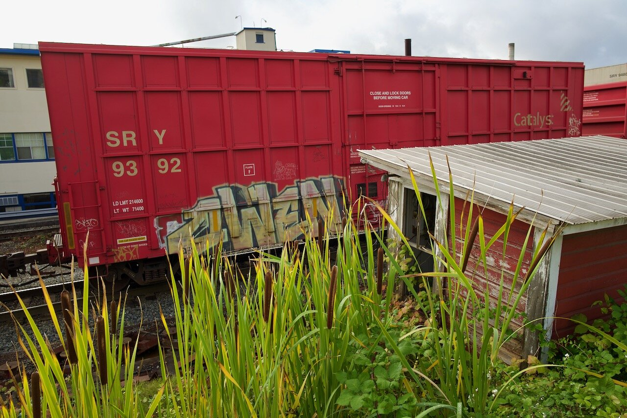 Bulrushes overwhelm abandoned railroad weigh scale, New Westminster B.C.