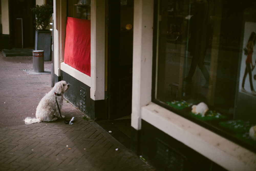 amsterdam_alecvanderboom (5 of 22).jpg