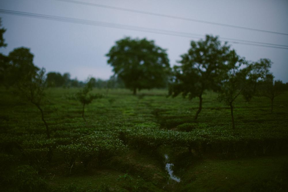 darjeeling_india_alecvanderboom (6 of 25).jpg