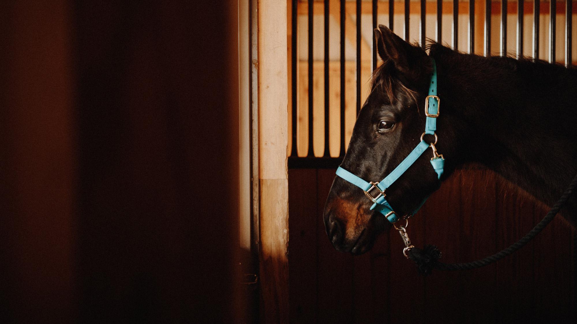 alec_vanderboom_horses_online-0002.jpg
