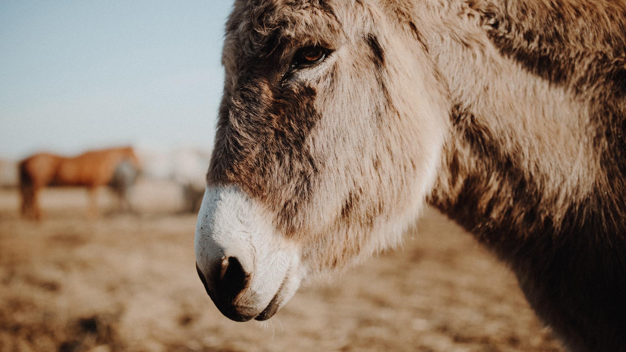 alec_vanderboom_horses_online-0004.jpg