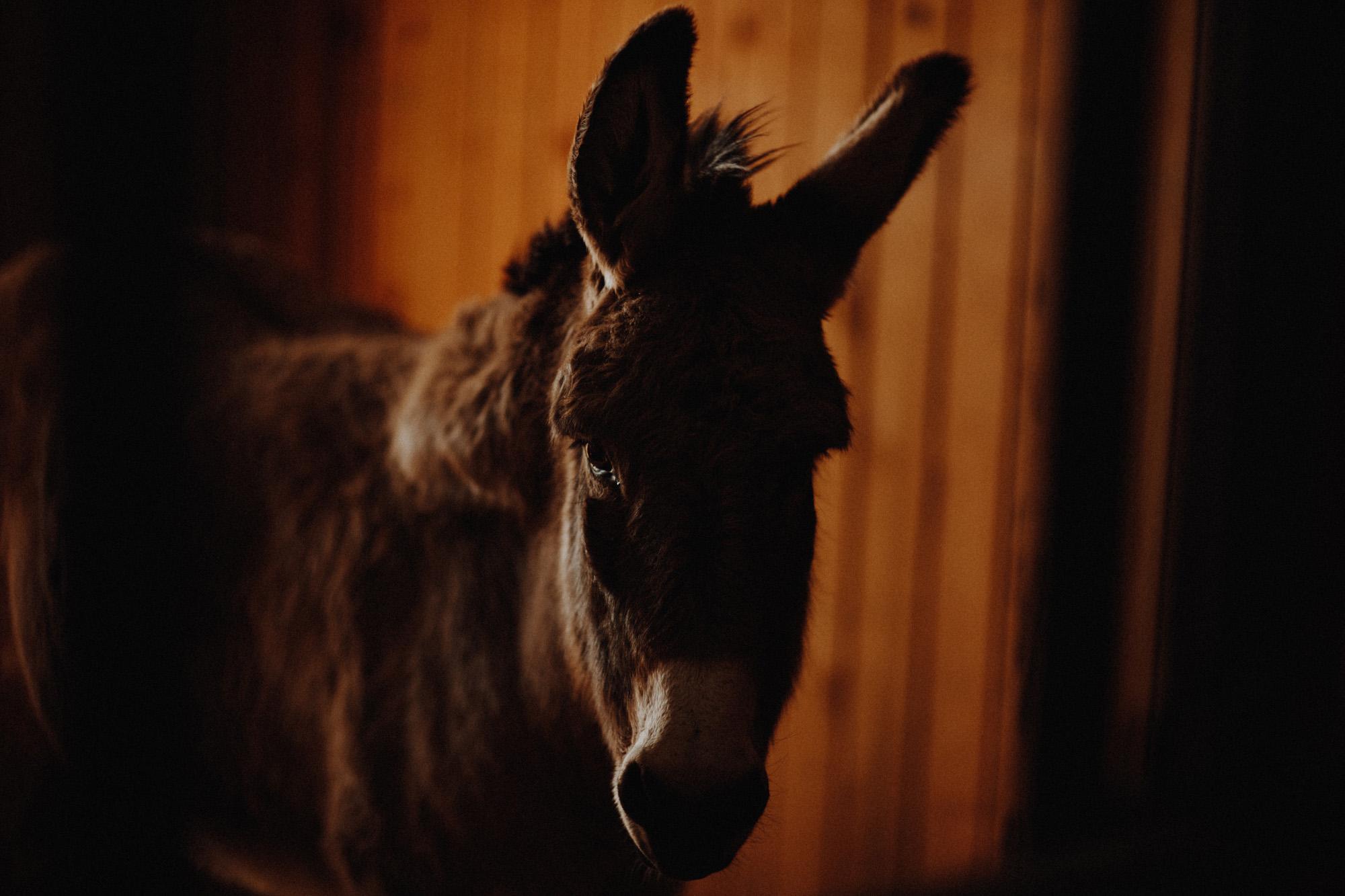 alec_vanderboom_horses_online-0020.jpg
