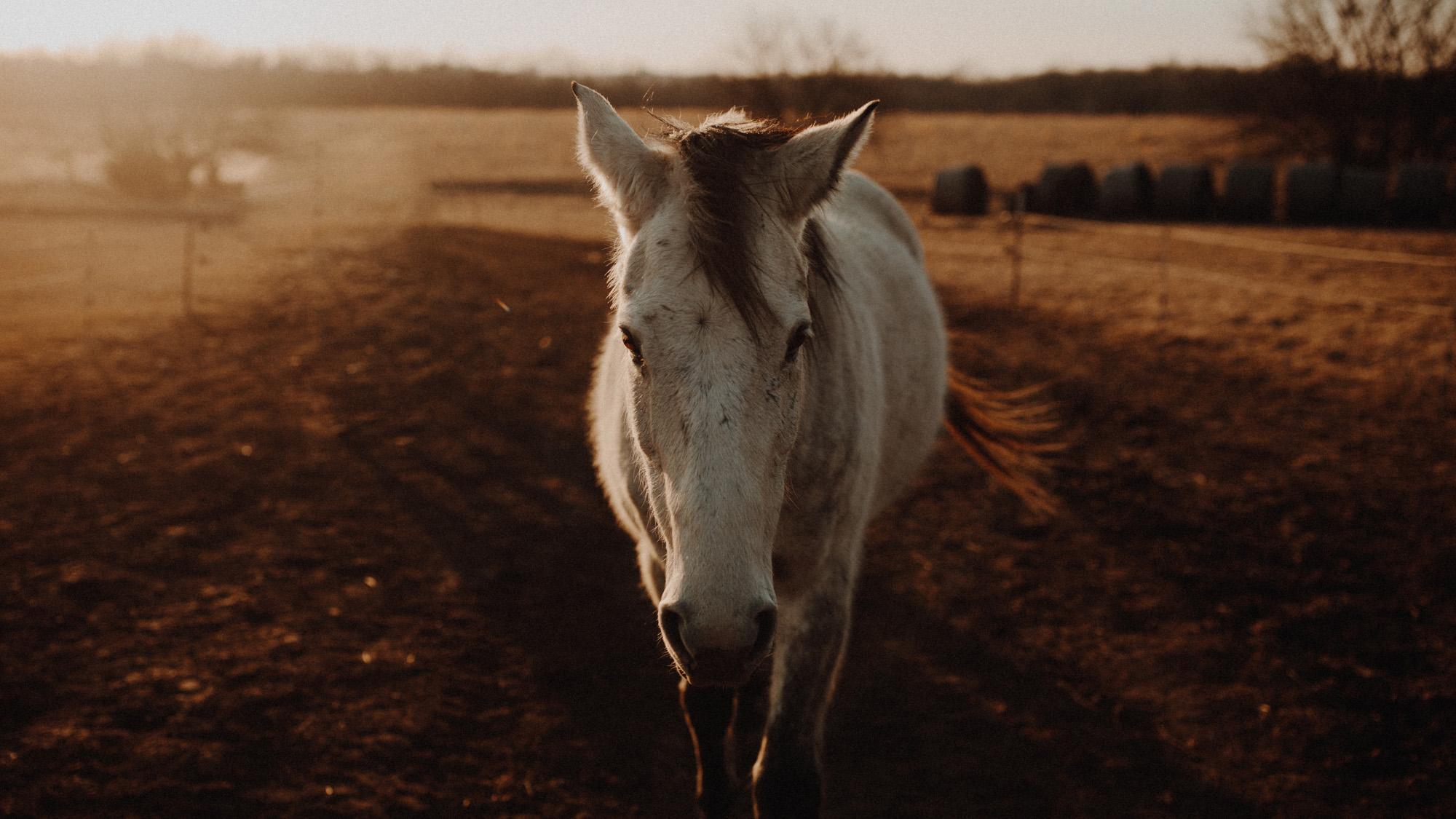 alec_vanderboom_horses_online-0022.jpg