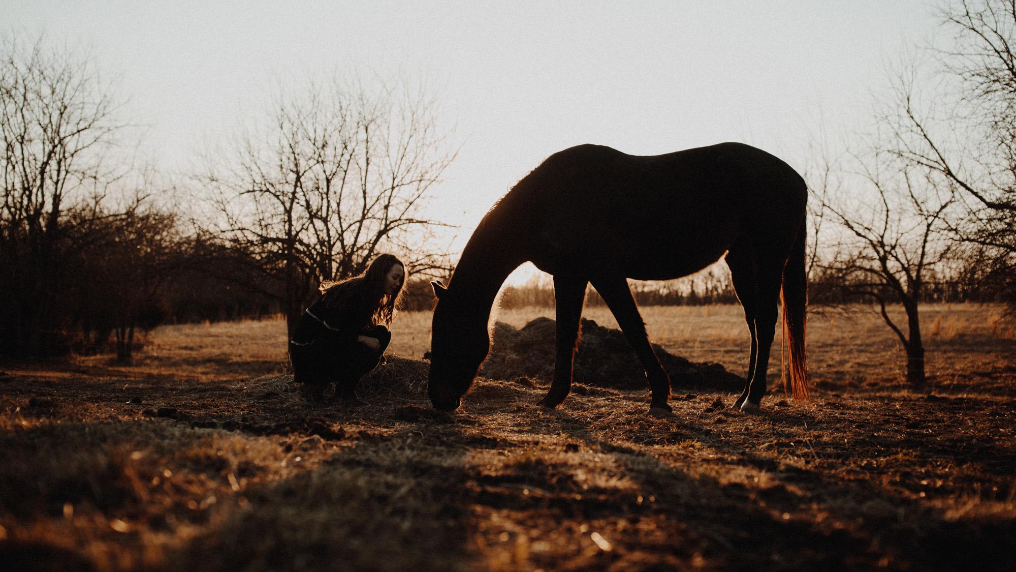 alec_vanderboom_horses_online-0024.jpg