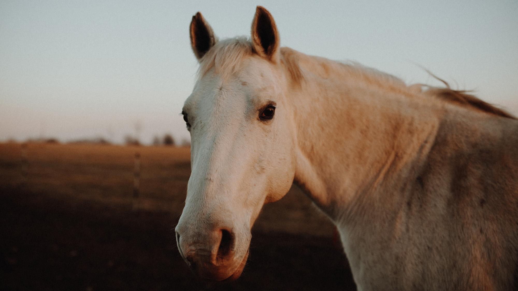 alec_vanderboom_horses_online-0041.jpg