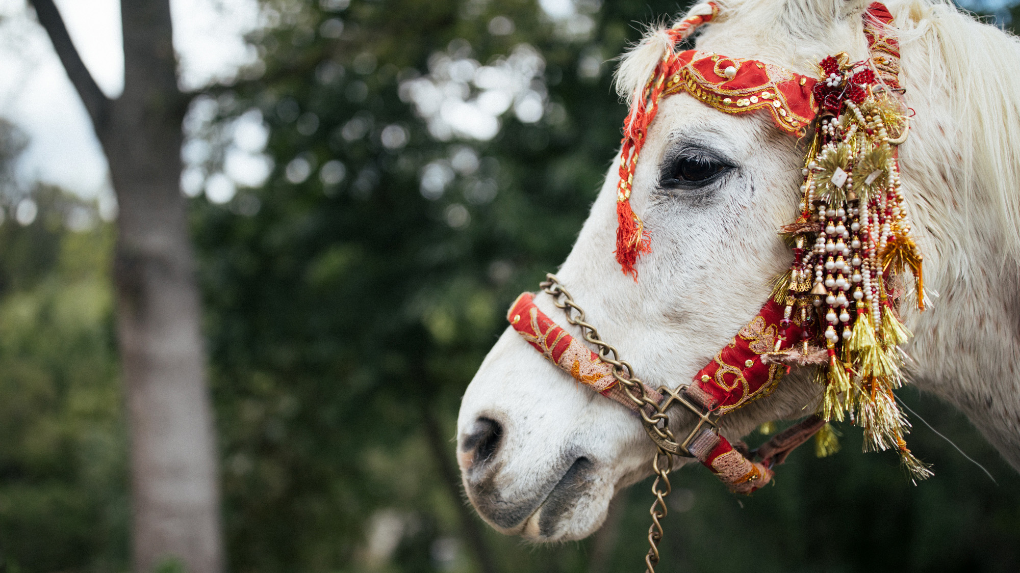 anu_maneesh_alec_vanderboom_Indian_wedding_photography-0067.jpg