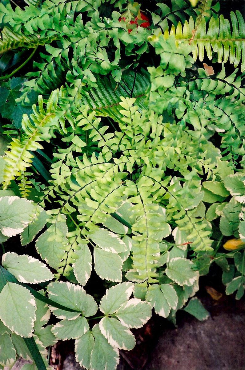1 plants texture.jpg