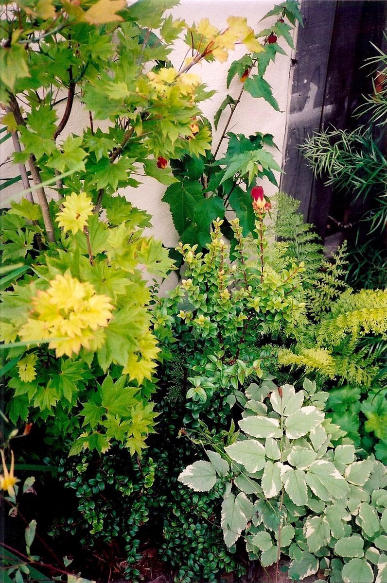 2 plants texture.jpg