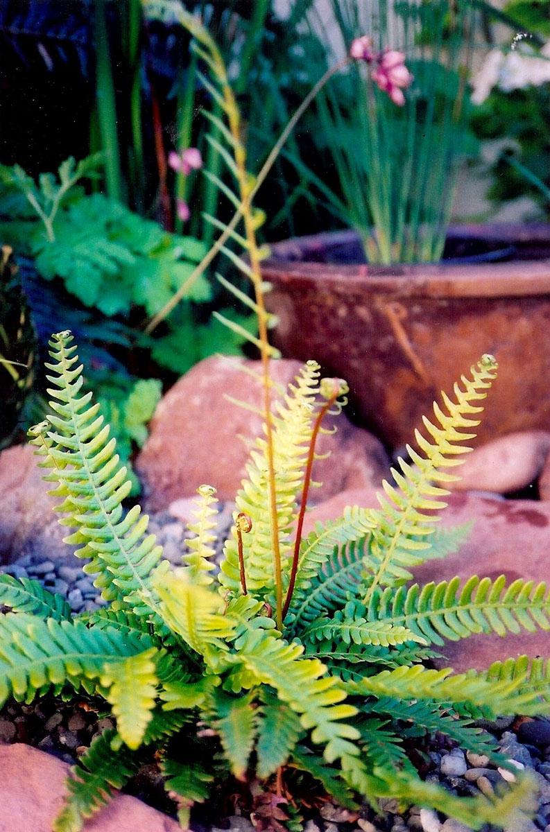 3 plants texture.jpg