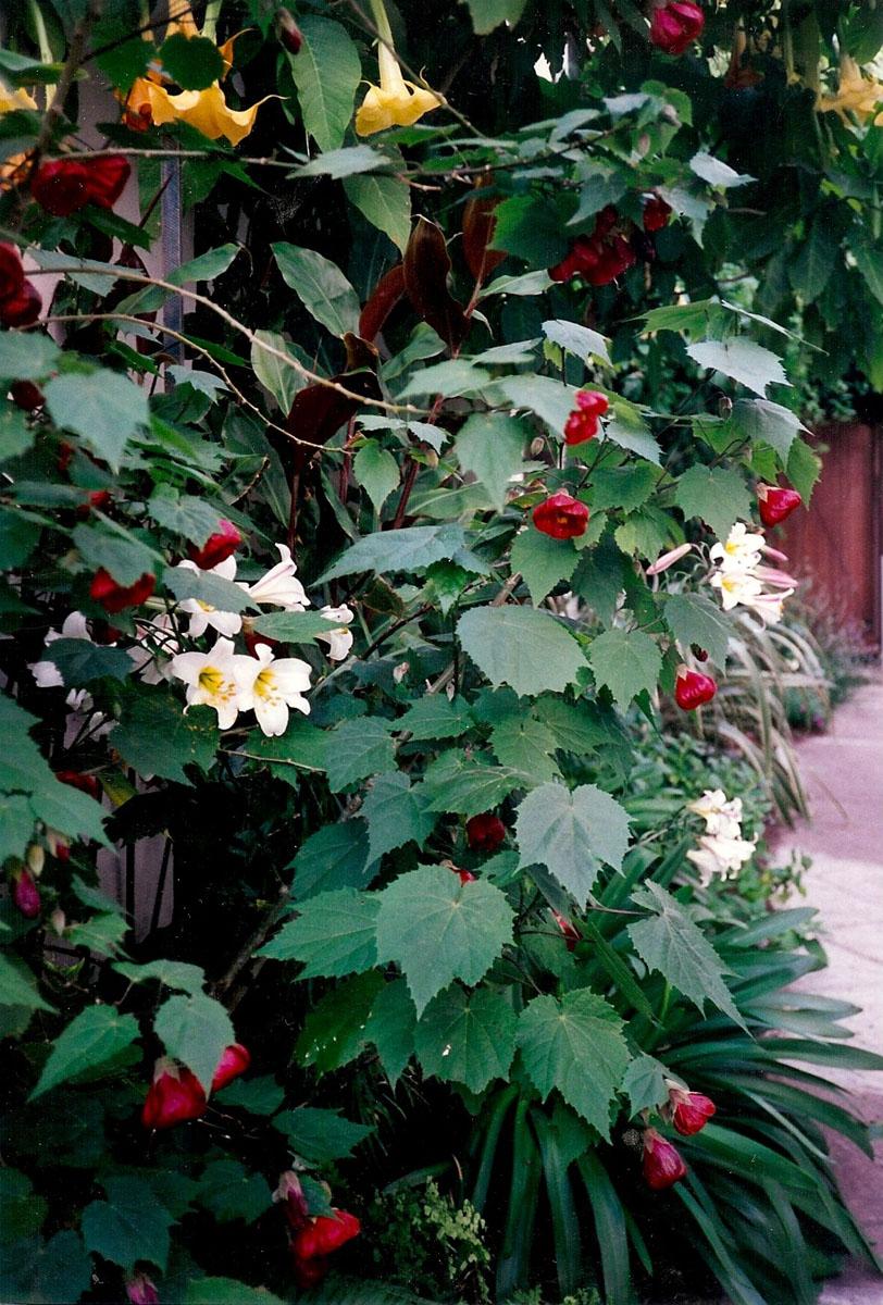 plants 4.jpg