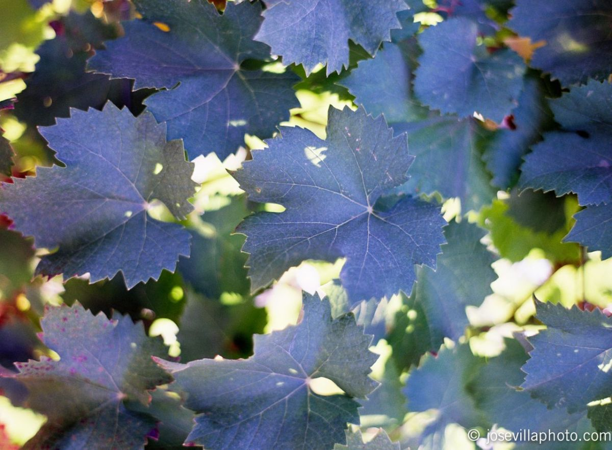 20111027-008605-r1-e013.jpg