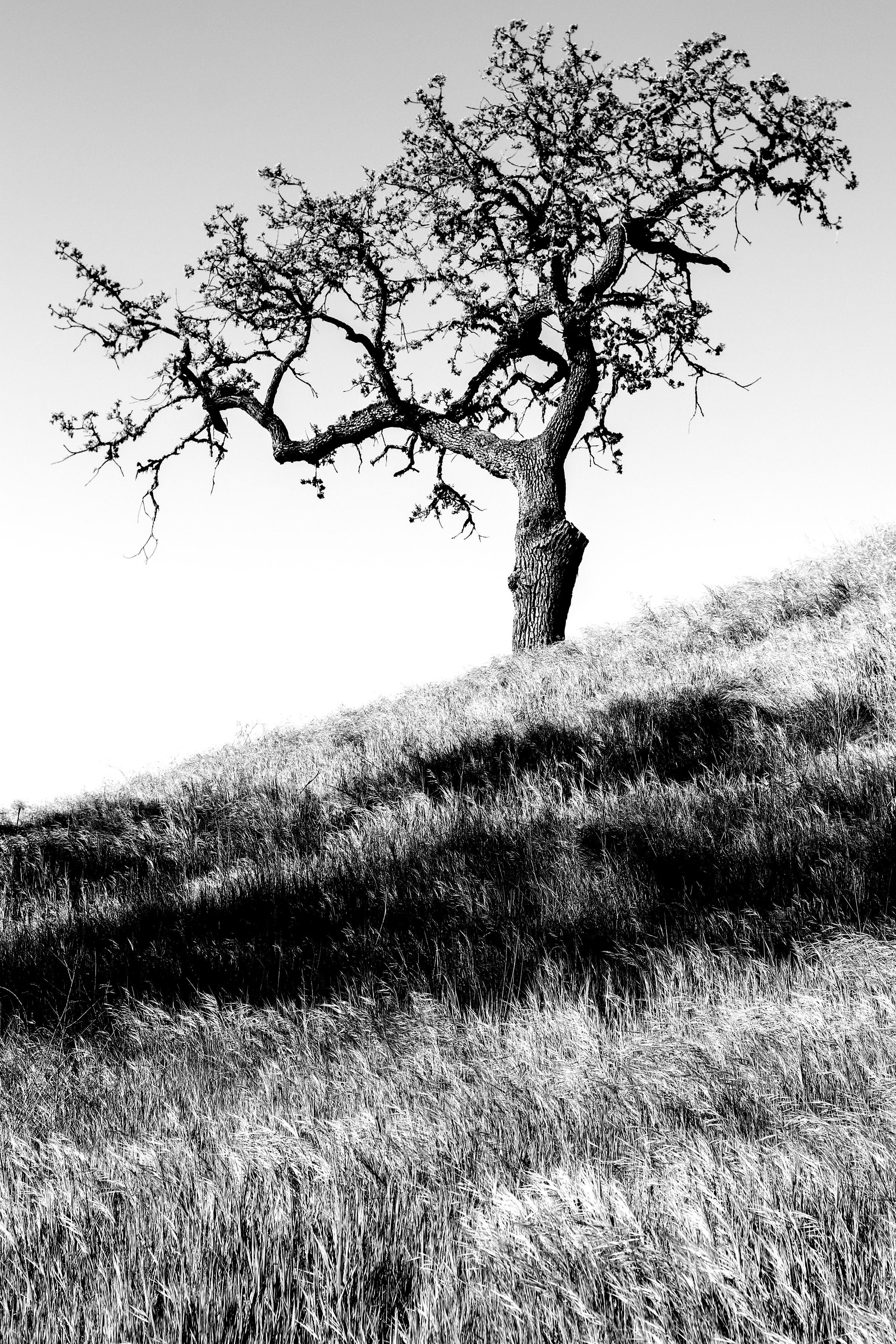 Tree for 2018 - 2.jpg