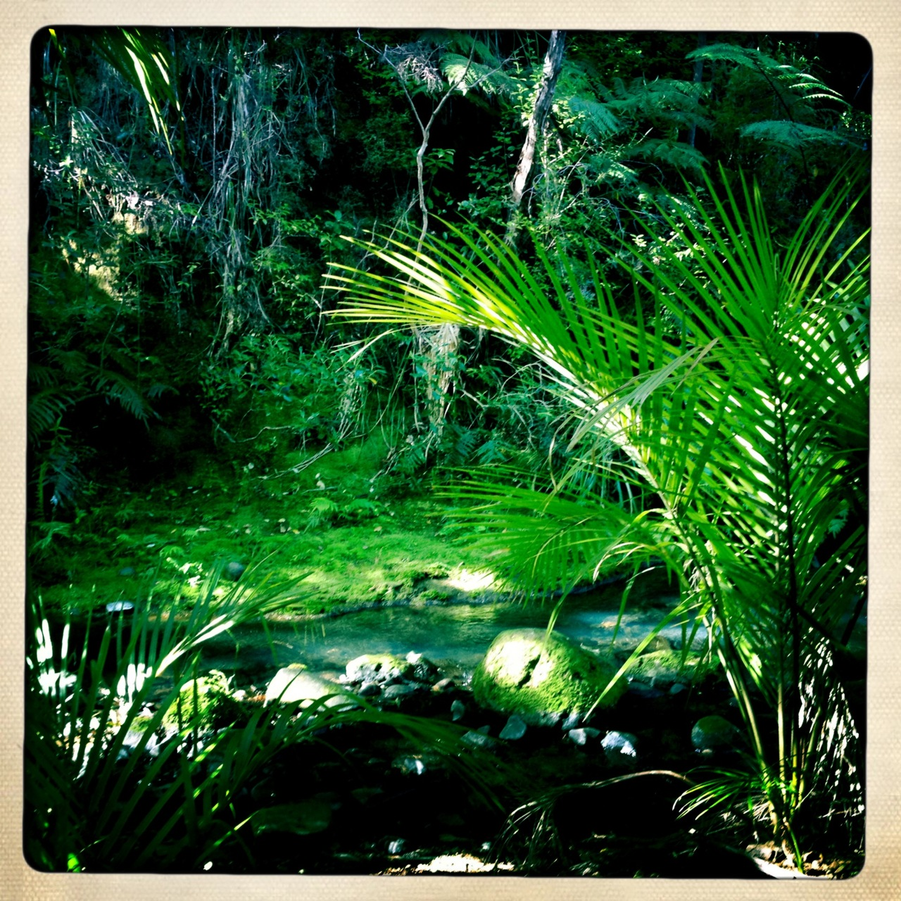 Rainforests in Piha