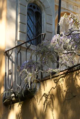 28.Fiori, Florence, Italy.jpg