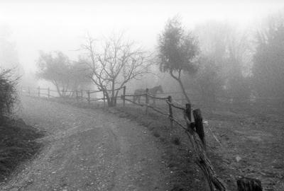1.A Morning's Work, Vallebona.jpg