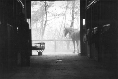 4.Morning Chores, Vallebona.jpg