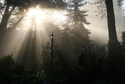 7.My Backyard, Ann Arbor.jpg