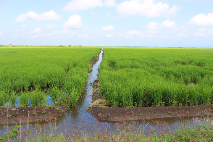 Stranded roadside amidst rice paddies