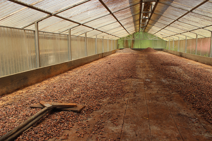 Drying cacao nibs