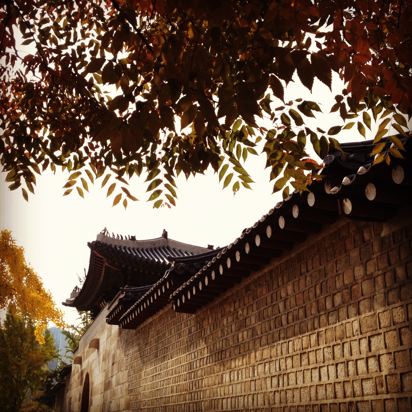 Autumn in Seoul, outside the walls of Gyeongbokgung Palace