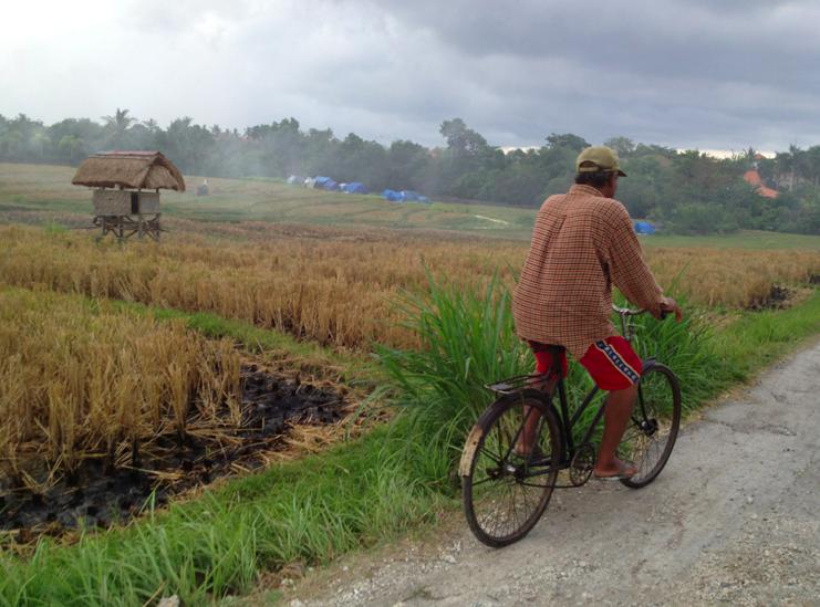 Motorbiking through rice paddies