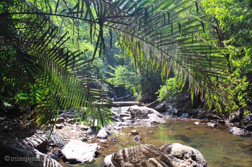Jungle hiking