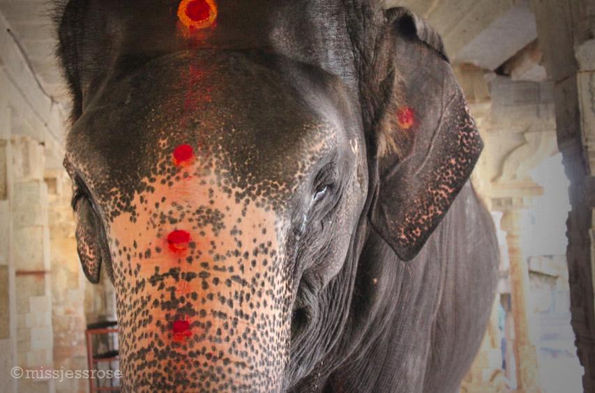 Lakshmi-sized bindis
