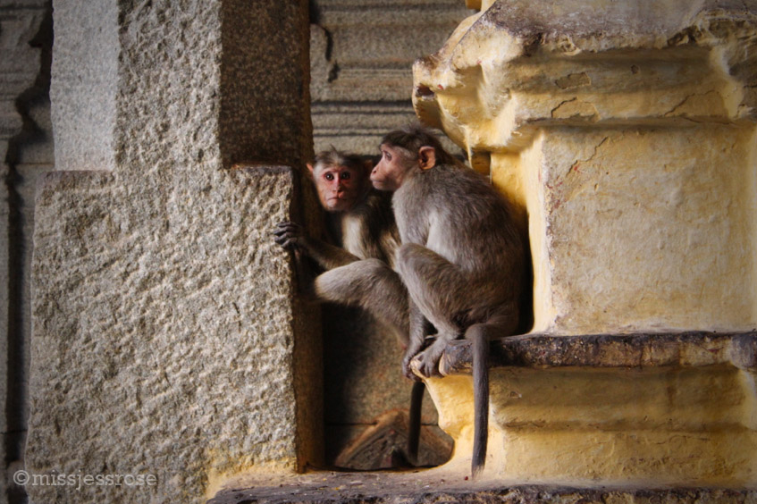 Creepy monkeys live in the temple and will try to snatch food or other loose items from visitors