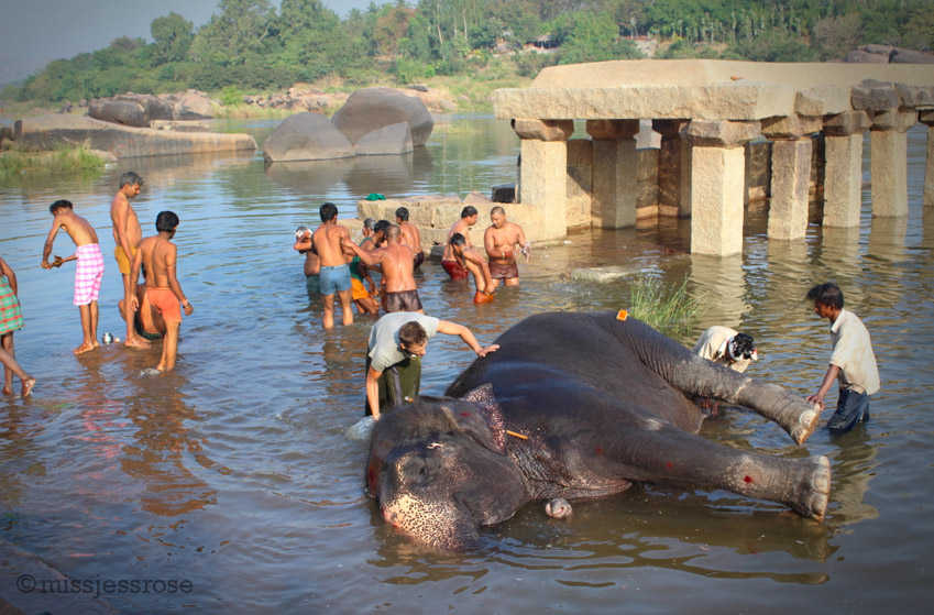 The locals don't seem to think anything is out of the ordinary. Apparentlytaking a bath beside an elephant is no big deal.