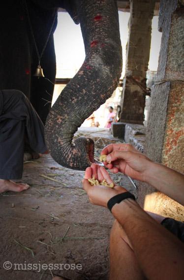 Feeding cashew snacks