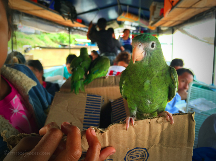 Bird friend on the boat taxi.