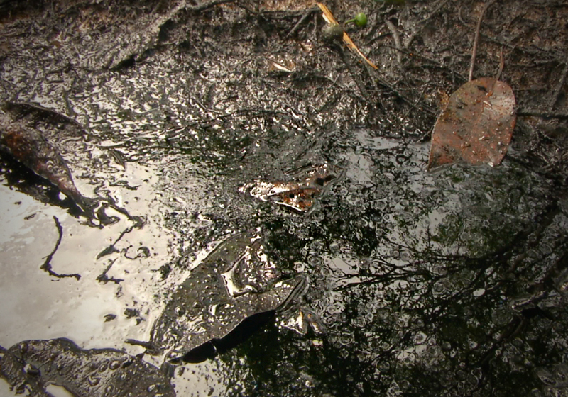 The heart of an oil spill in the Amazon rainforest.