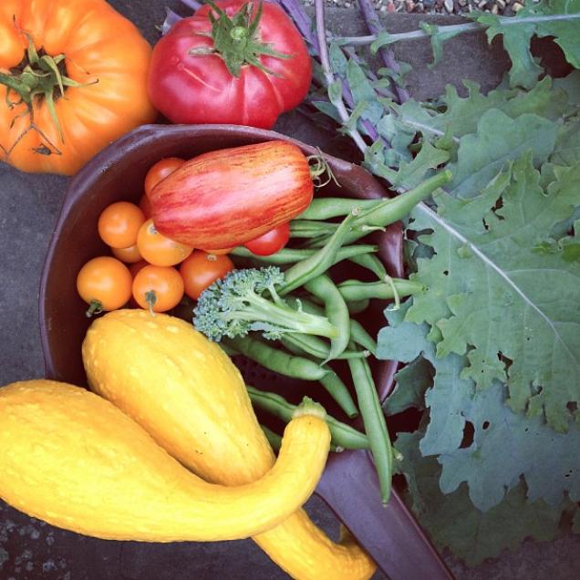 My garden harvest, Michigan