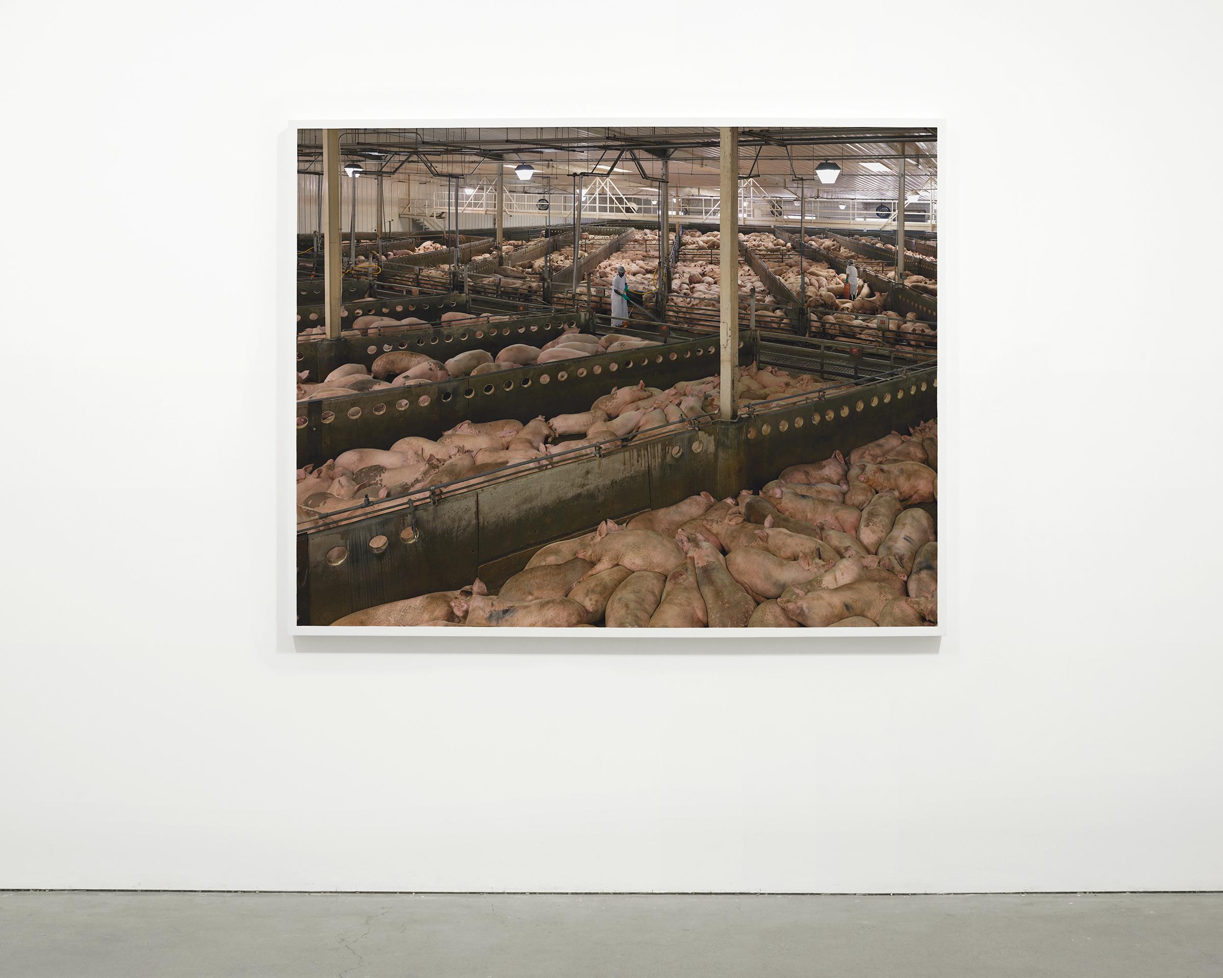 """""""Stockyard"""", 2013 - 2015  54 x 68.25 in (137.15 x 173.35 cm)"""