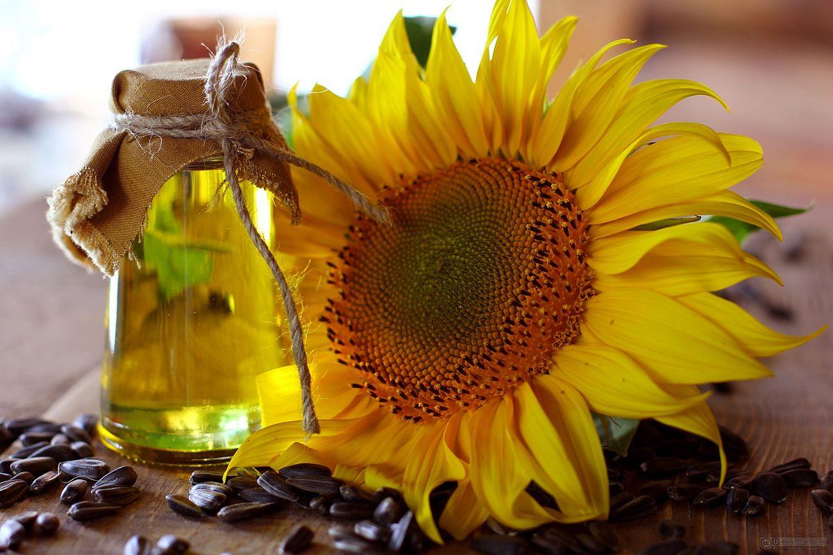 Sunflower_oil_and_sunflower.jpg