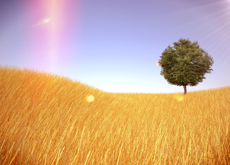 straw hills tree.jpg