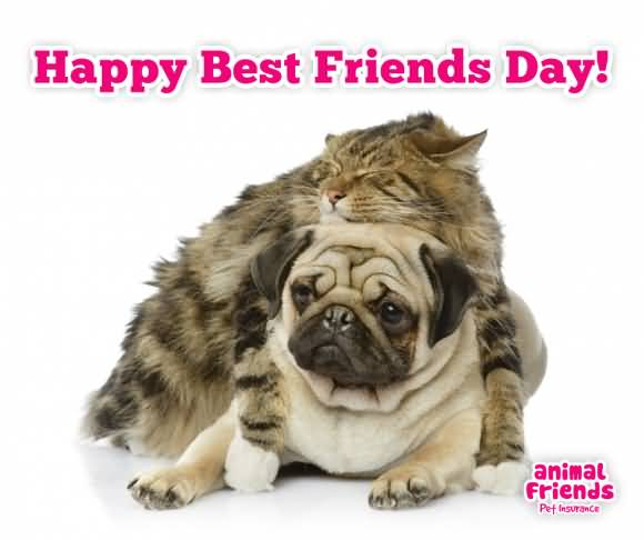Happy-Best-Friends-Day-Cat-And-Dog-Picture.jpg