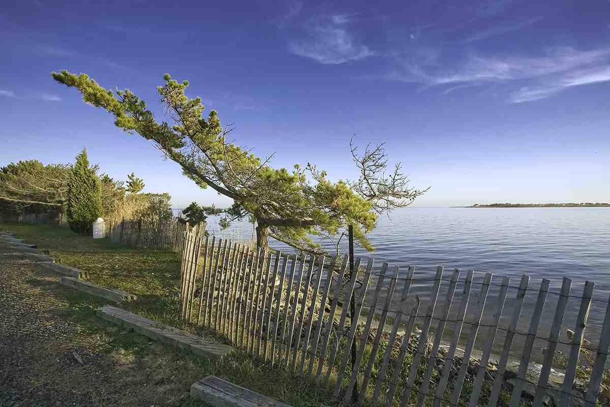 Sea Pine & Fence, Barnegat Bay