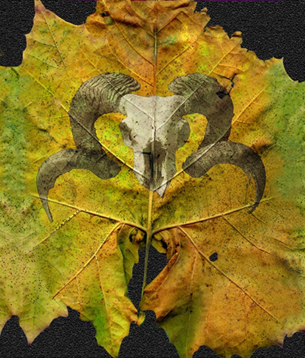 Leaf & Skull