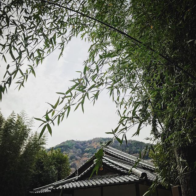 Bamboo forest outside Kyoto