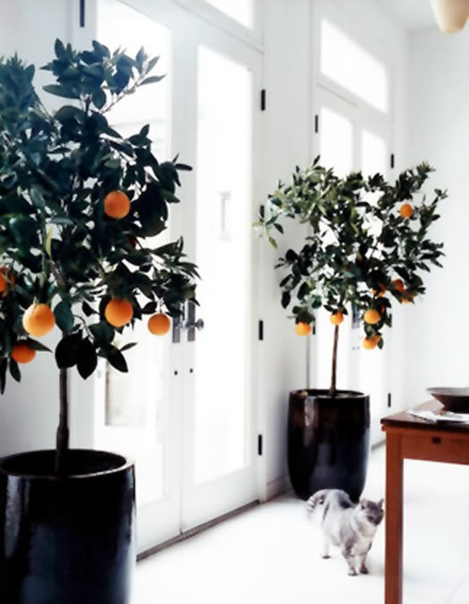 When The Greenery Goes A 'Lil Crazy (...& That's A GOOD Thing ;-)➤ http://CARLAASTON.com/designed/swap-holiday-decor-for-indoor-plants #indoor #plant