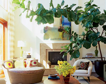 The Art Of Watering   Or: How NOT To Kill Your Houseplant