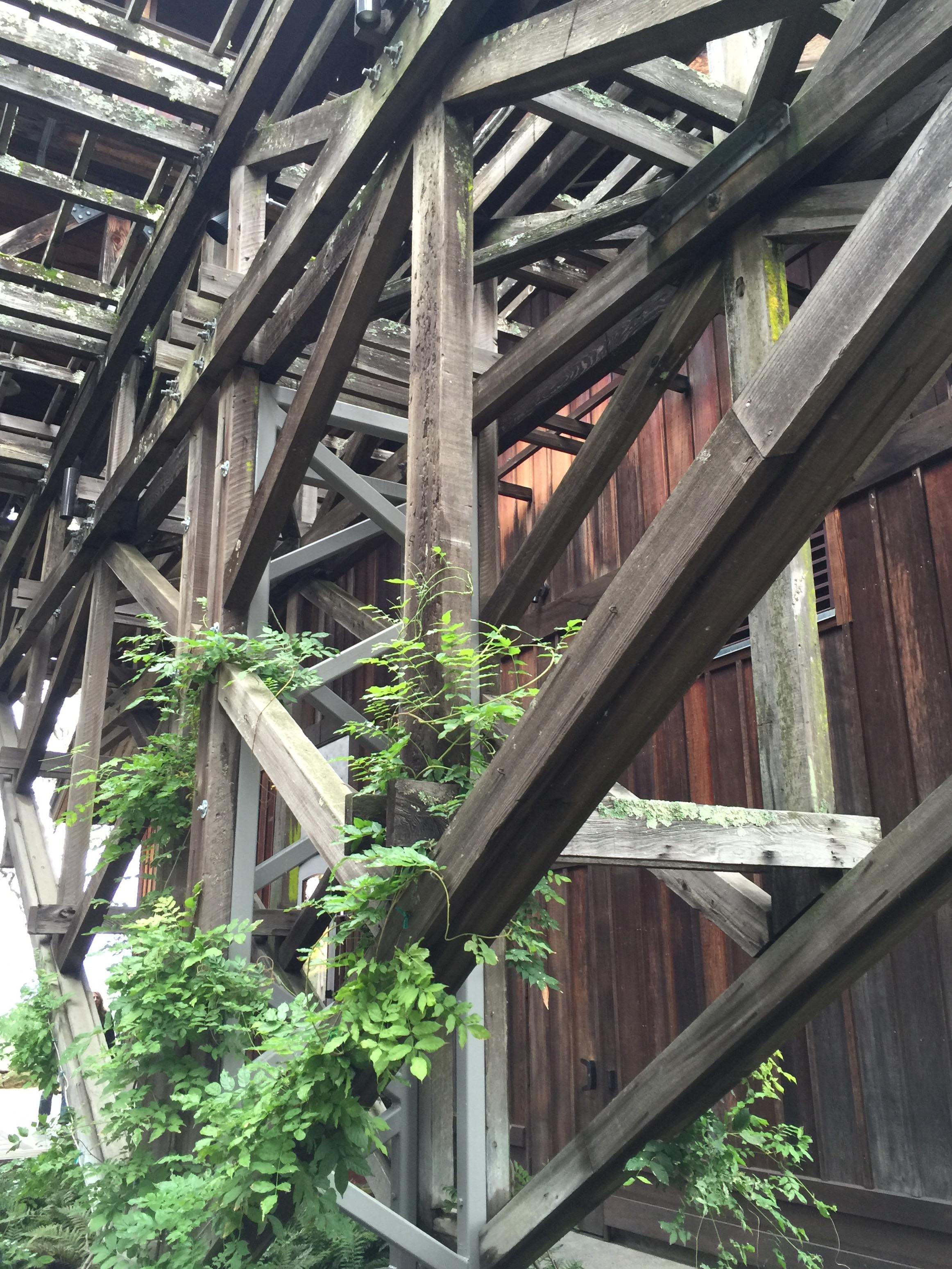 Trellis detail at Joseph Phelps Vineyards Winery in Napa Valley