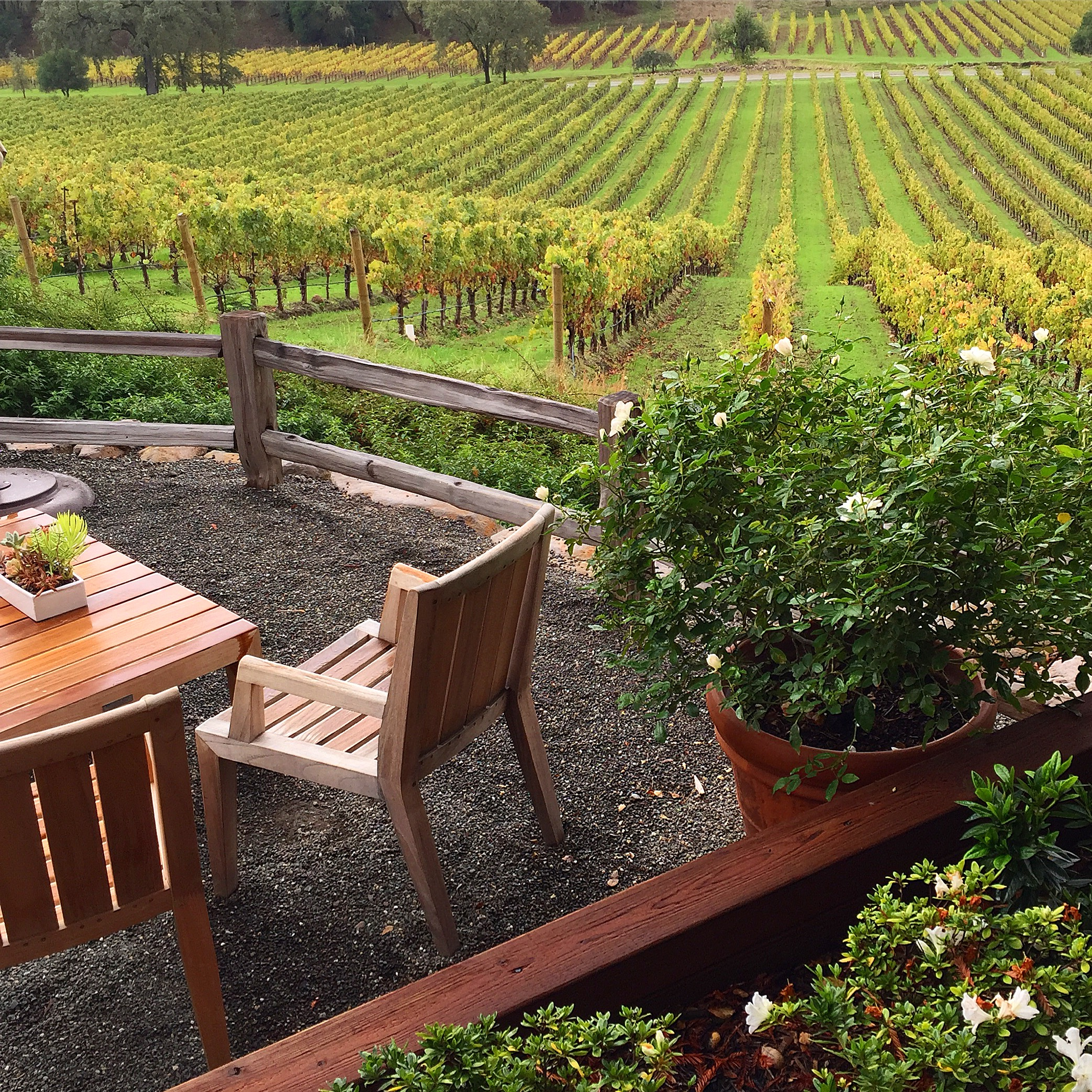 The views at Joseph Phelps Vineyards. The fall colors were starting to show and it was spectacular!
