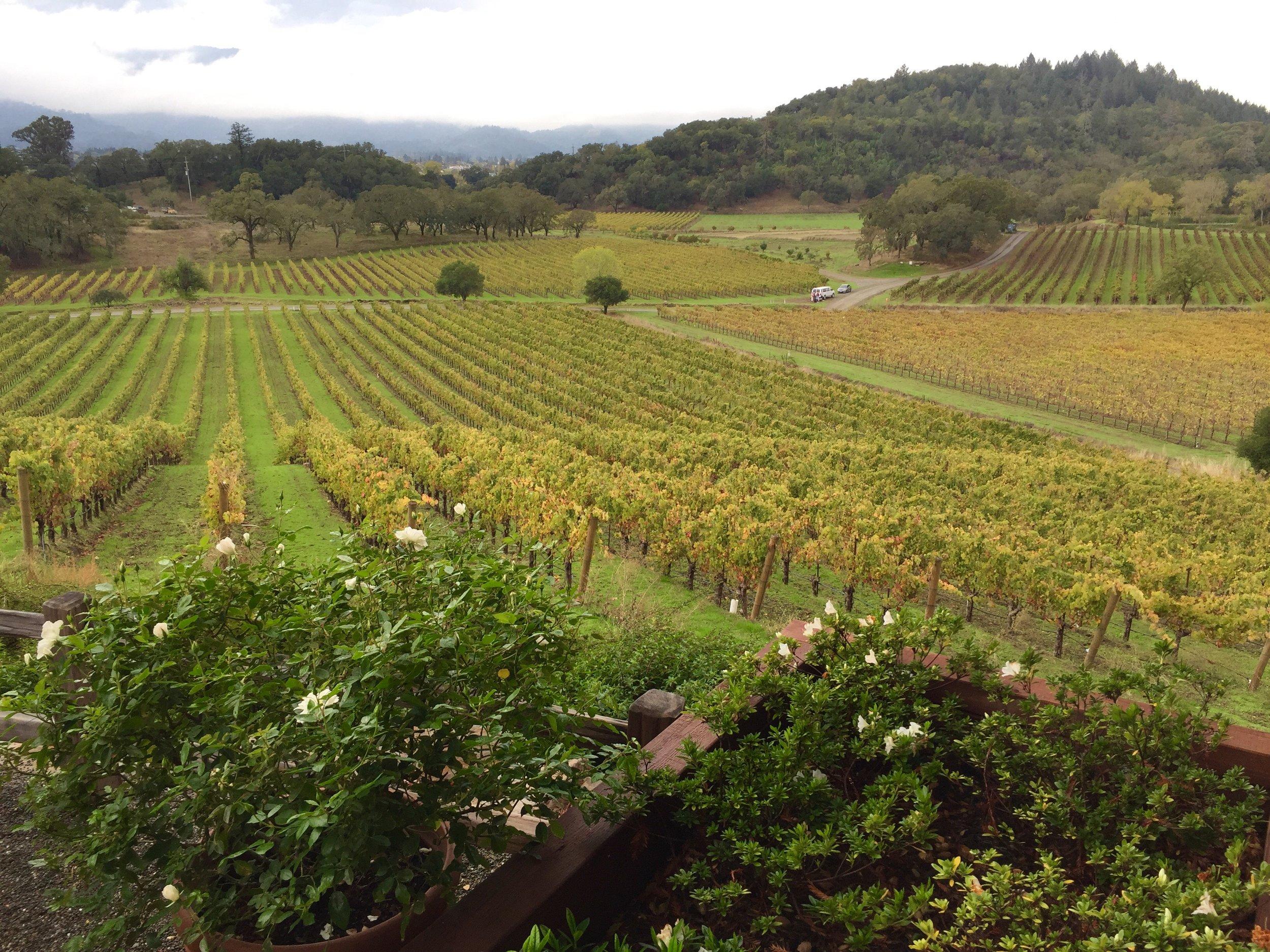 Spectacular views at Joseph Phelps Winery
