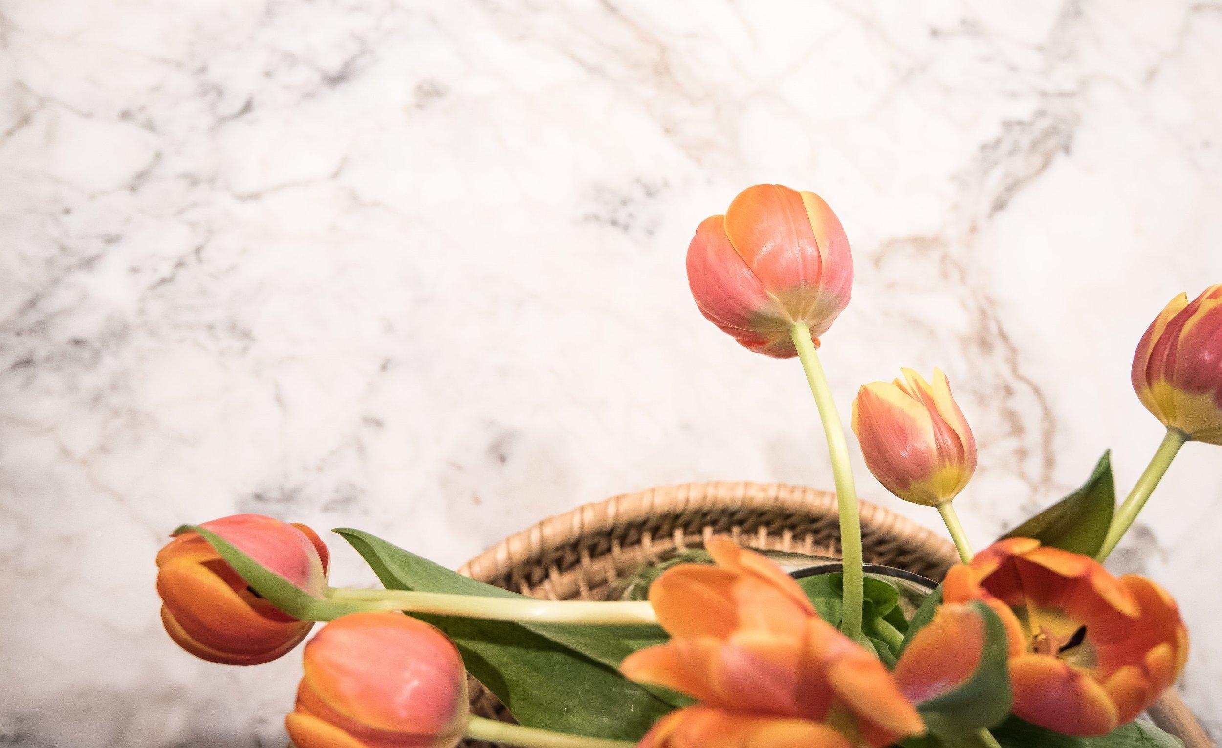 White marble countertops - Designer Carla Aston, Photographer Lauren Giles
