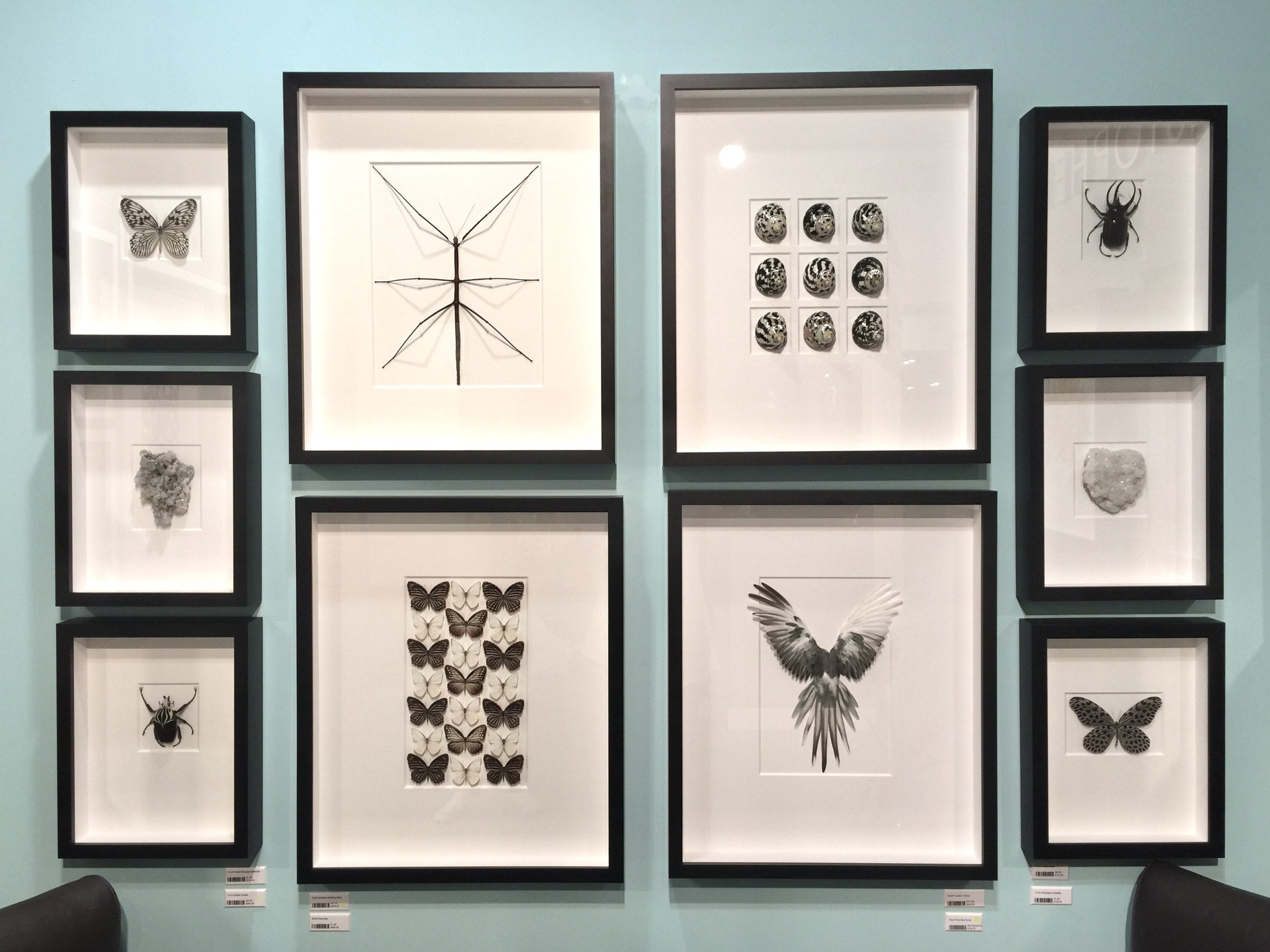 Bugs and natural elements framed as art from Pheromone