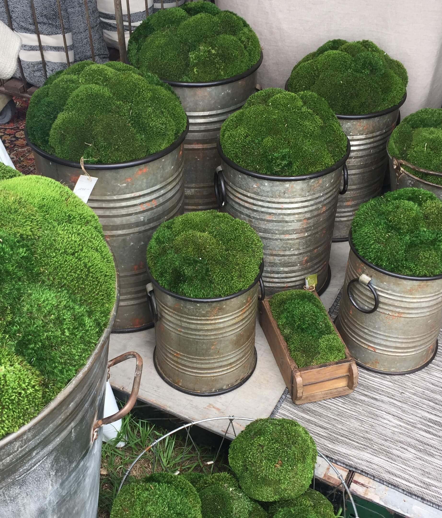 Moss filled planters from Round Top, TX #roundtop #planters #moss