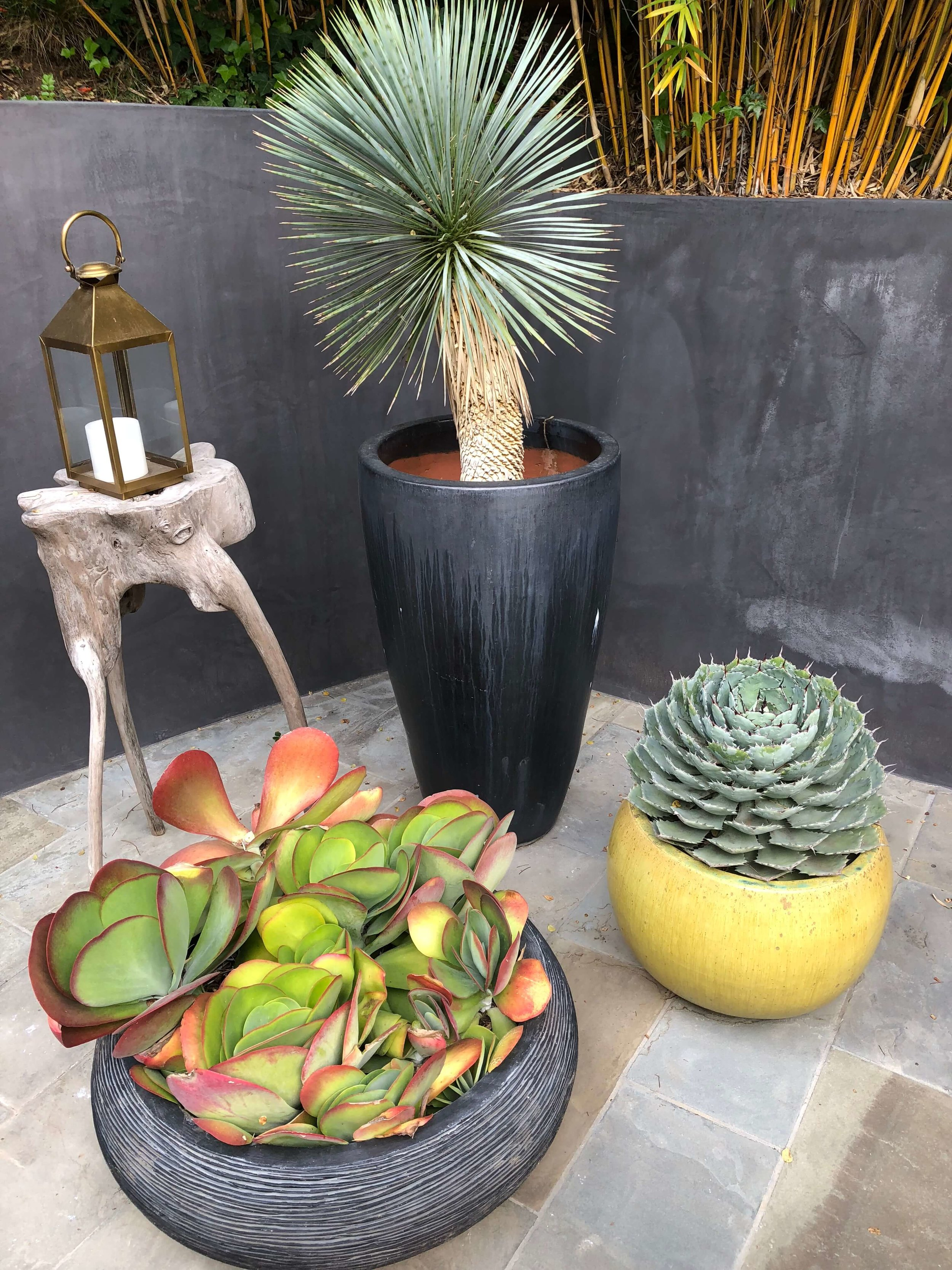 Succulents in pots in backyard patio - Assembledge+ Architects, Dwell on Design, Los Angeles, California #succulents #succulentcontainer #planters #backyardideas